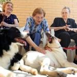 Comienza a ser relativamente frecuente que los ancianos de los asilos reciban terapia de mascota.