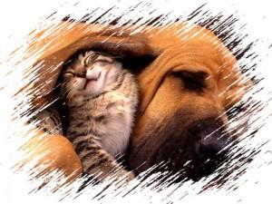 Un niño puede beneficiarse en muchas facetas con la llegada de una mascota al hogar.
