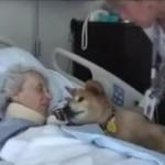 Devolver la sonrisa y fortalecer a los enfermos es tarea de las mascotas terapeutas.