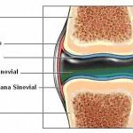 El líquido sinovial de las articulaciones resulta fundamental para reducir la fricción entre los cartílagos y otros tejidos.