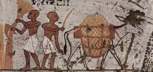 La economía del antiguo Egipto se basaba en la agricultura que dependía de los cultivos de las tierras inundadas por el río Nilo.