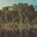 Bosque ecuatorial.