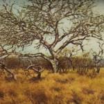 La sabana es el paisaje típico de la zona tropical húmeda.
