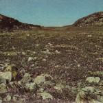Tundra en el Cape Dorset, en el Canadá.