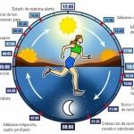 Cada función biológica del cuerpo sigue pulsos cíclicos distintos que no sólo trabajan en equipo, sino que también van unidos a los ciclos del mundo natural, los períodos alternos de luz solar y oscuridad, la luna creciente o menguante y los cambios de estación.