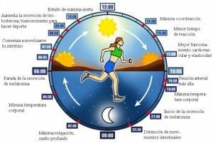 Cada función biológica del cuerpo sigue pulsos cíclicos distintos que no sólo trabajan en equipo, sino que también van unidos a los ciclos del mundo natural.