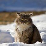 Los gatos se vincularon al mundo de los humanos debido a la aparición de almacenes y asentamientos que atraían a roedores y, por ende, tenían alimento seguro en zonas pobladas.