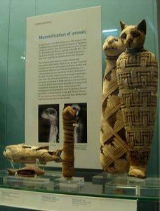 Al morir, eran embalsamados con los mismos materiales e idéntico cuidado que empleaban los egipcios con cualquier otro miembro de una familia.