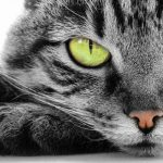 Los propietarios de gatos visitan al médico con menos frecuencia, potencian la autoestima y la habilidad social, contribuyen a la comunicación y la afectividad dentro del hogar.