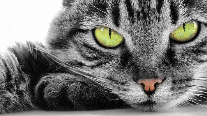 Los gatos, dispensadores de longevidad