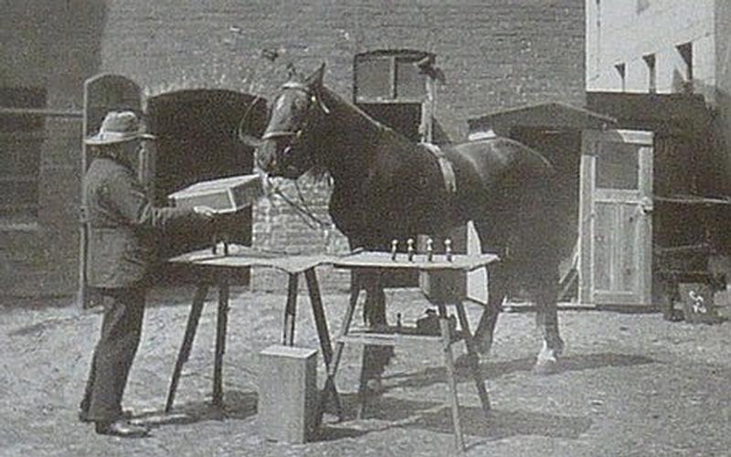 Caballo alemán famoso en el siglo XX.