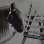 El caballo Hans en la máquina de sumar.