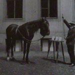 El caballo Hans era un alumno extraordinario. Aprendidas las operaciones más fáciles, era luego capaz de responder bien a cálculos más complejos para los que no había sido instruido específicamente.
